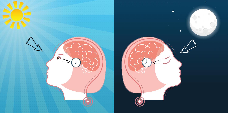 Sammenhængen mellem melatonin og søvn – Stor guide